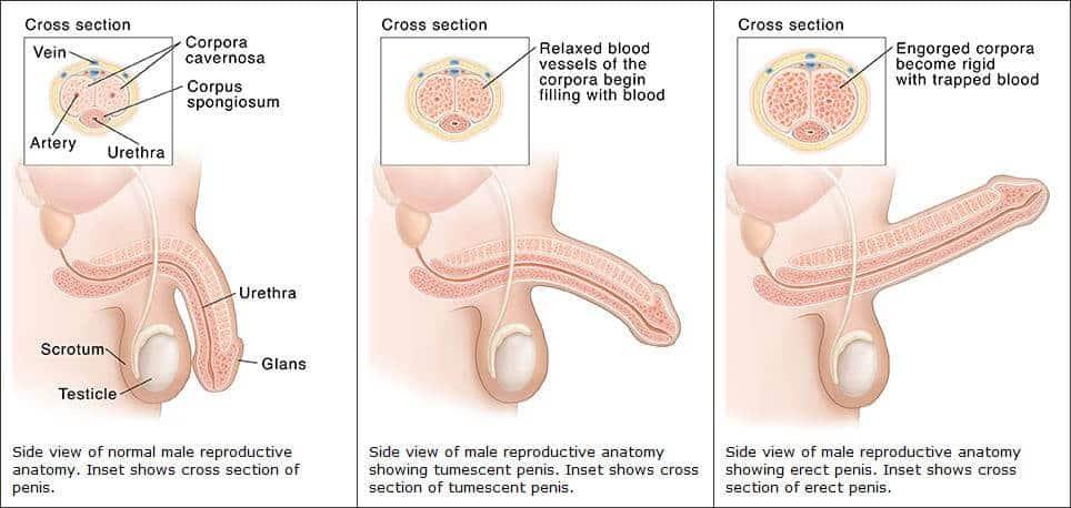 az erekció elesésének okai