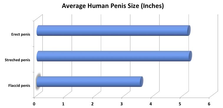 mi van a péniszben legolcsóbb péniszek
