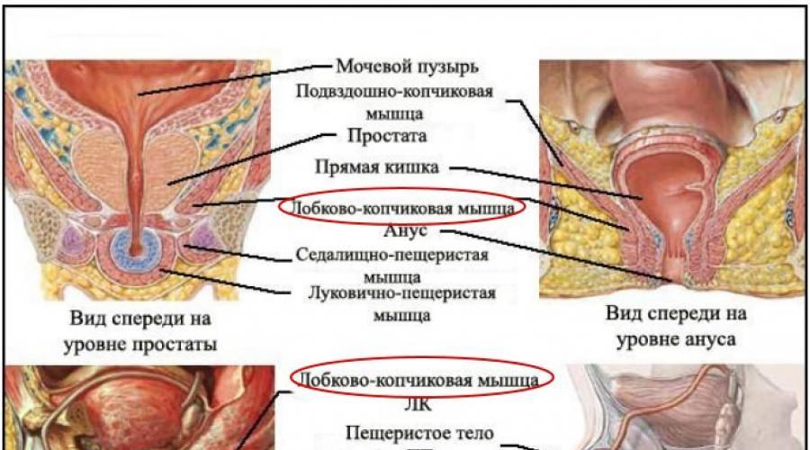 hogyan lehet fejleszteni az erekciós izmokat