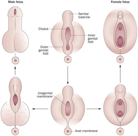a pénisz megállt