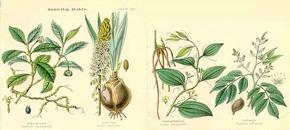 az erekcióra ható gyógynövények