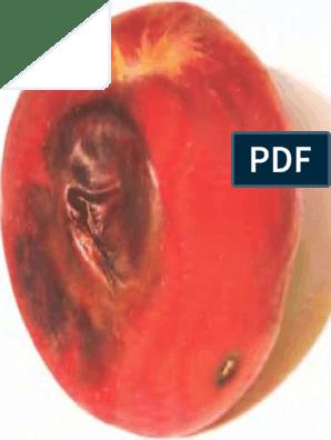 a péniszbe szorítva