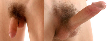 7 meglepő tény a férfi nemi szervről | Well&fit