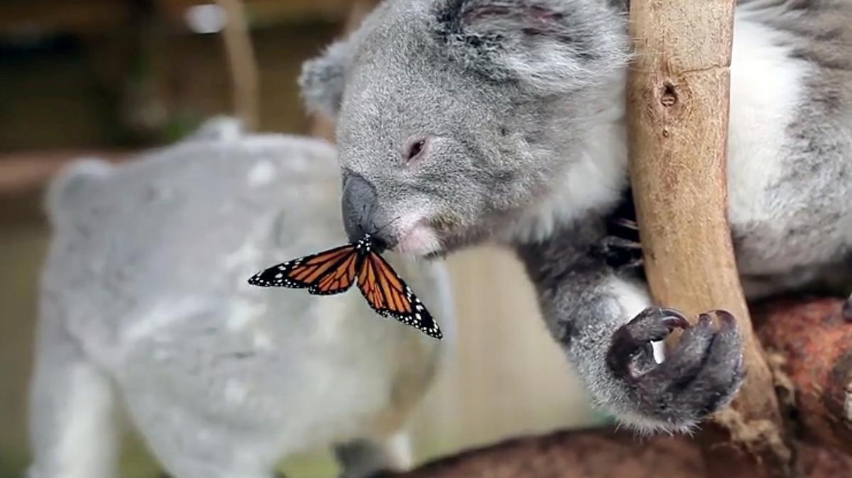 Elképesztő pillanat - ennél gyönyörűbb állatos fotókat ma már biztos nem lát - galéria
