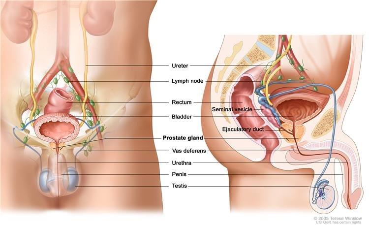 erekció orchiectomiával