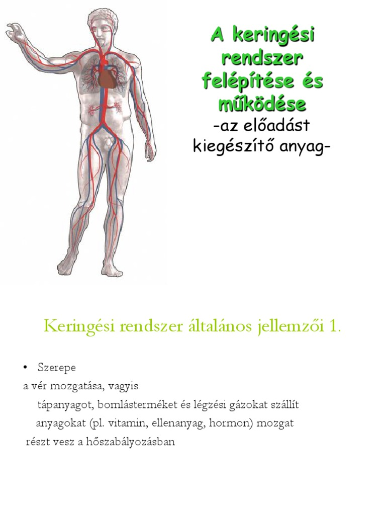 Férfi anatómia